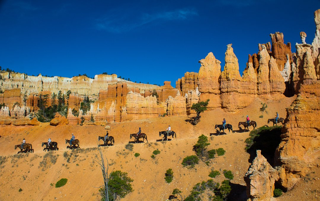canyon trail rides bryce canyon